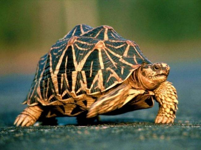 Как содержать черепах в доме