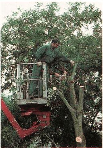 Как валить дерево