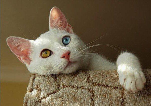 Как вывести кошачий запах из ковра